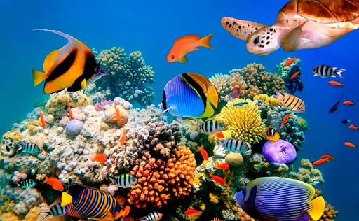 Reef-Oasis-Beach-Resort-4-800x480